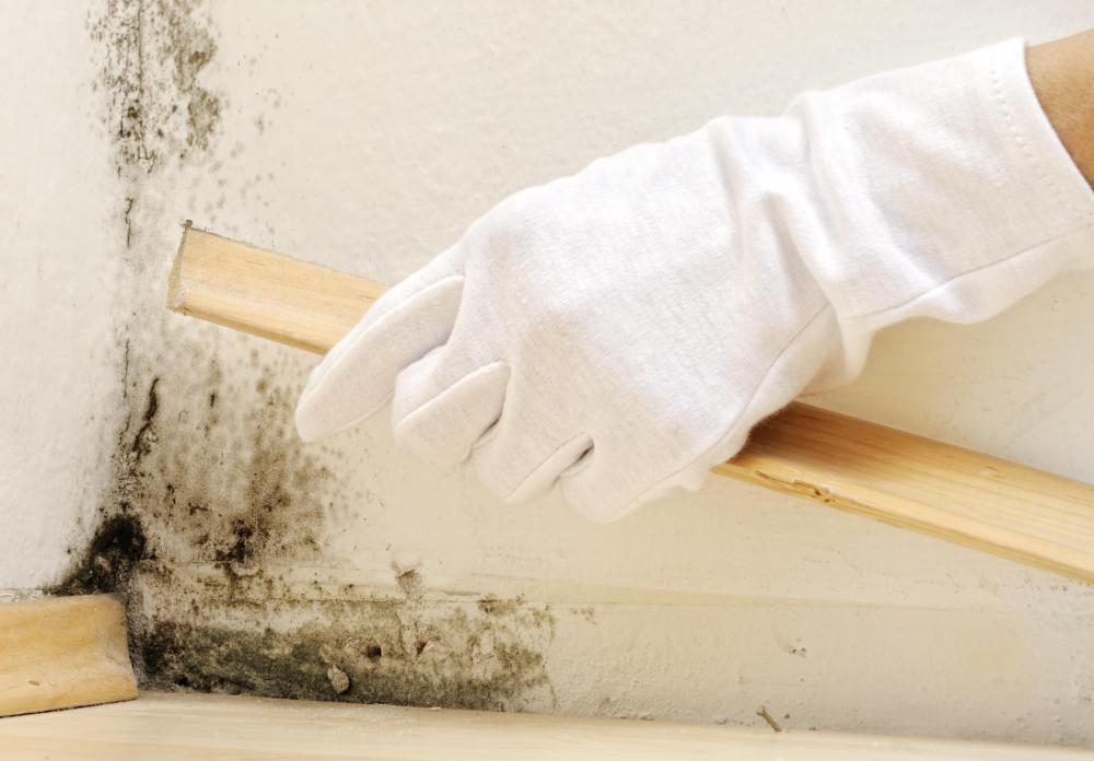 Плесень в доме. Как бороться и как предупредить ее развитие в начале ремонта